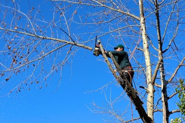 Tree Pruning Vacaville, Fairfield, Tree Removal