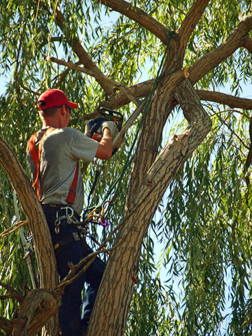 Tree service in vacaville trimming pruning tree removal stump grinding